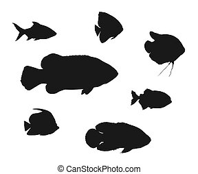 Different fish silhouettes