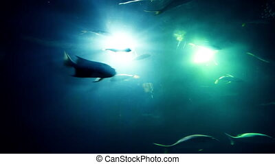 different fishes at a aquarium