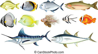 Illustration of the different fishes on a white background