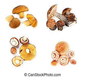 Different fungi decomposed into four piles