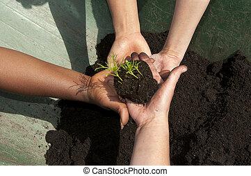 different hands holding seedling