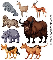 Different kind of wild animals