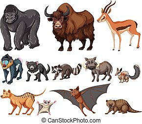 Different kind of wild animals on white