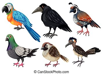 Different kind of wild birds