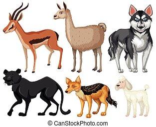 Different kind of wildlife illustration
