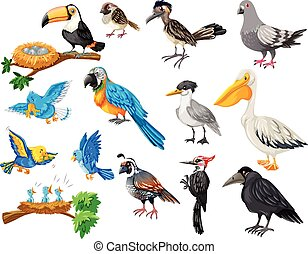Different kinds of birds set