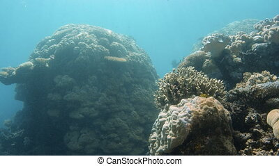 Different kinds of coral reef underwater