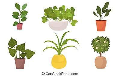 Different kinds of green home plants in pots vector ...