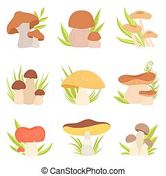 Different Kinds of Mushrooms Set, Forest Edible and Inedible...