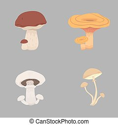 different kinds of mushrooms. set mushroom vector illustration