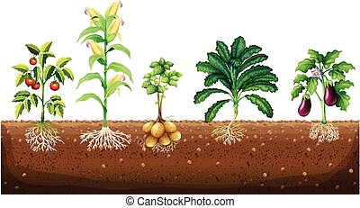 Different kinds of plants growing in the garden