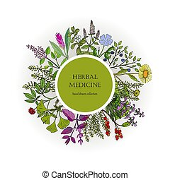 Different medicinal plants collection. Hand drawn vector...