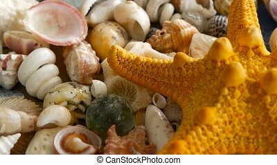 Different mixed colorful seashells as background. Various...