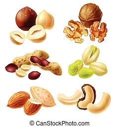 Different nuts realistic vector set