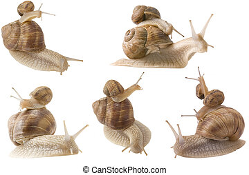 piggy back snails - different point of view from piggy back...