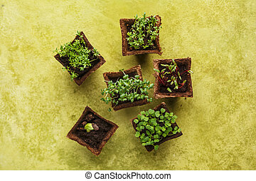 Different potted seedlings growing in biodegradable peat...