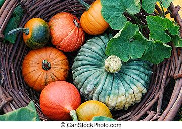 Different pumpkins in a wicker basket