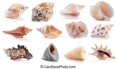 different sea shells (2)