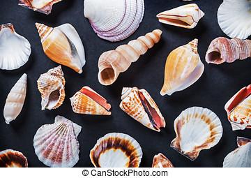 sea shells on a black background