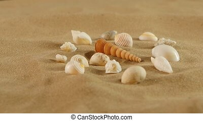 Different sea shells on beach sand, rotation