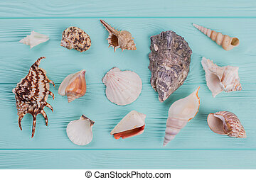 Different sea shells on turquoise background.