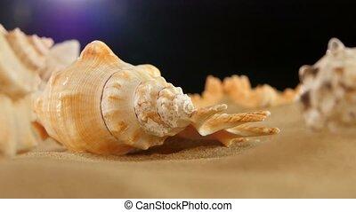 Different sea shellsand starfish on beach sand, black, rotation, close up, macro
