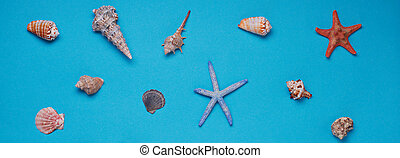 Different seashells on blue background