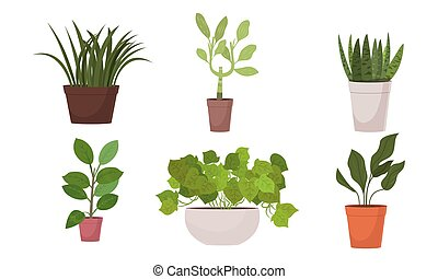 Different shapes of green blooming home plants in pots ...