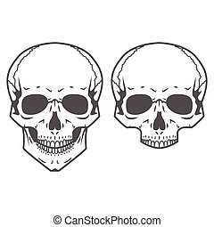 Different skulls on white background