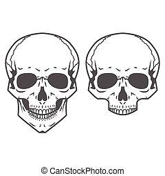 Different skulls on white background