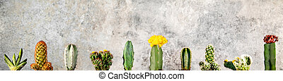 Different sorts of cacti in a row in front of grey background with copyspace, panorama