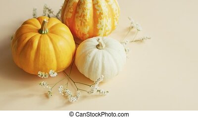 Different sorts of pumpkins and herbs - From above view of...