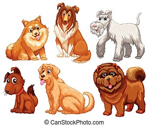 Different species of dogs on a white background