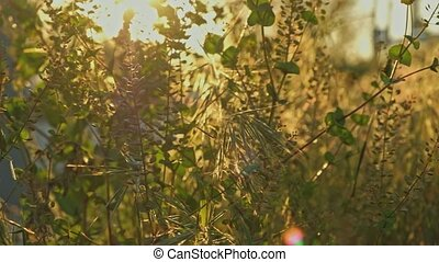 Different species wild grass view in sunset light grownd...