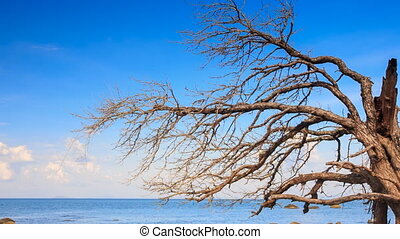 Different Stones in Shallow Azure Sea Leafless Tree -...