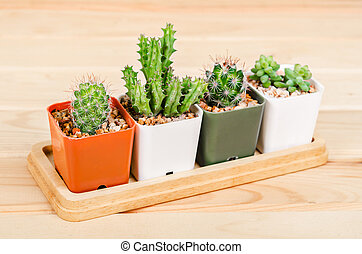 Different succulents and cactus in pots. - Different...