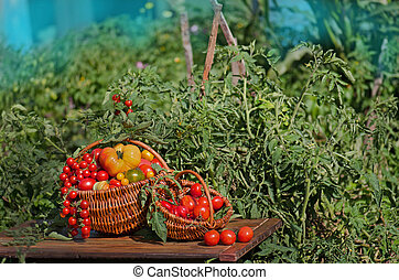 Different tomatoes in baskets near the greenhouse