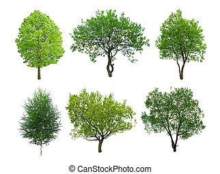 tree - different tree isolated on white