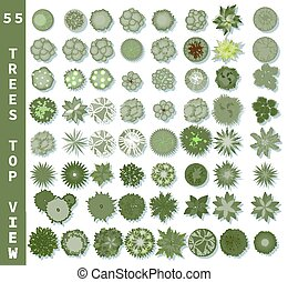 Different trees top view. View from above set for architectural and landscape natural green space design. Vector