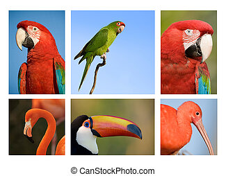 Different tropical birds collection 1. - Collection of...