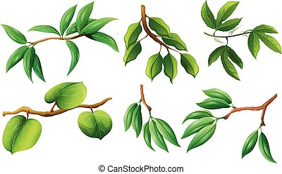 Different type of leaves on branch