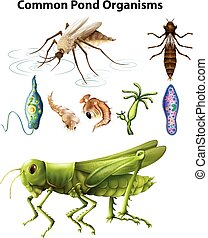 Different types of common pond organisms illustration