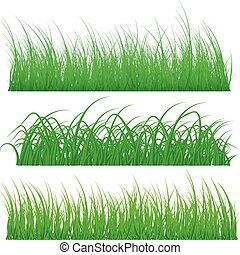 Different types of green grass isolated on white background