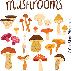 Different types of mushrooms set, vector illustration