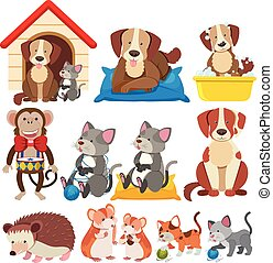 Different types of pets on white background