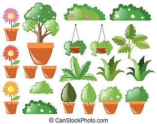 Different types of plants