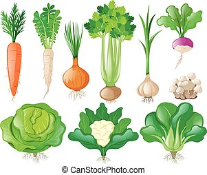 Different types of vegetables