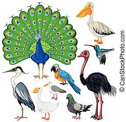 Wild birds Illustrations and Stock Art. 36,094 Wild birds ...