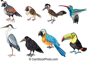Different types of wild birds