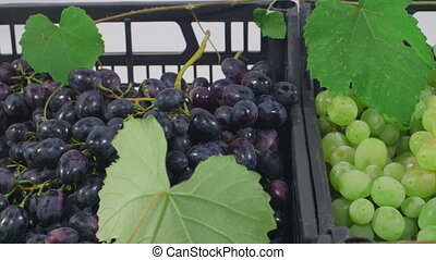 Different varieties of grapes